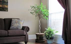 living room with plants home design ideas