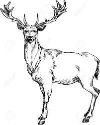 drawn deer pencil and in color drawn deer