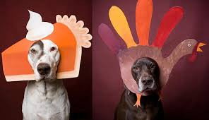 thanksgiving safety broad ripple animal clinic