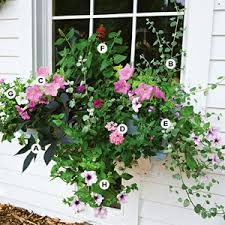 Flowers For Window Boxes Partial Shade - easy recipes for beautiful window boxes in sunny spots