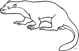 north american river otter coloring free printable coloring