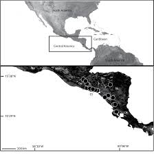 Black And White Map Of Central America by A Revision Of The Spider Genus Selenops Arachnida Araneae