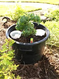 Growing Basil Bonnie Plants by Container Gardening Bonnie Plants Patio The Container Tomato