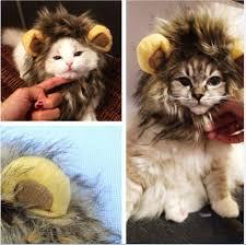 kitten halloween costumes reviews online shopping kitten
