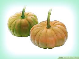 Squash Plant Diseases Pictures - 3 ways to grow squash wikihow