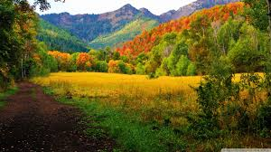 Utah forest images Canyons autumn mountains utah canyon forest colors provo road jpg