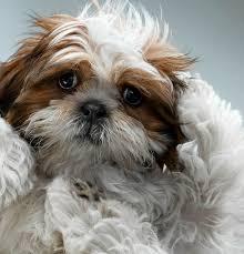 boxer dog in heaven best 25 dog portraits ideas on pinterest dog photography dog