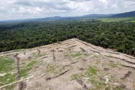 siege amazon s amazon rainforest the swath of vegetation that
