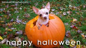 Chihuahua Halloween Costumes Chihuahuas Halloween Costumes Famous Chihuahua