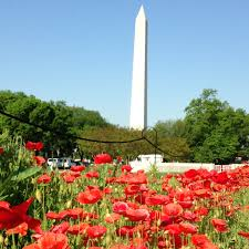 before memorial day brush up on your language of flowers