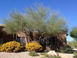 Southwest Landscape Design by Fall Blooms For The Southwest Garden Ramblings From A Desert Garden