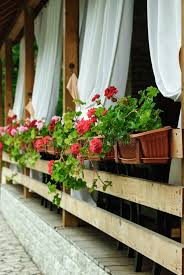 summer terrace with shades and geraniums stock photo image 55842219
