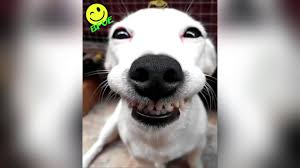 Smiling Dog Meme - crazy ever smiling dog with a tiny friend on his head youtube