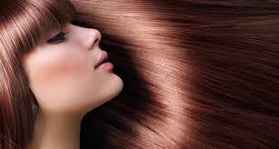 hair salon the salon delray