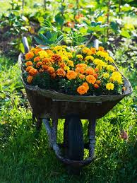Landscape Nurseries Near Me by Backyard Landscape Plant Are You Trying Find The Perfect