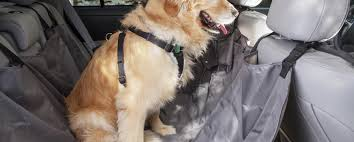 guidelines for buying dog seat covers puppy traffic