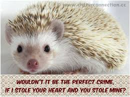 Hedgehog Meme - 36 hedgehog quotes by quotesurf