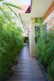 99 best plants grasses images on pinterest landscaping