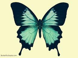 70 best u003c u003cbutterfly tattoos u003e u003e images on pinterest butterflies