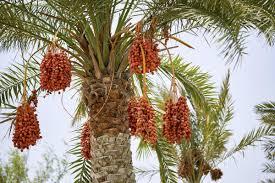 palm tree types
