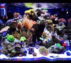 saltwater and reef tank cycling ratemyfishtank