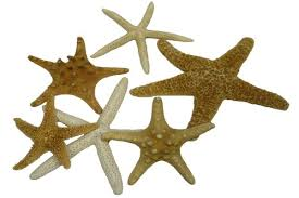 Where To Buy Seashells Where To Buy Seashells For Crafts Where To Buy Seashells