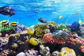 Hawaii snorkeling images Snorkeling in hawaii traveldeals jpg