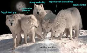 Three Wolf Moon Meme - 32 signs you are literally a badass wolf irl