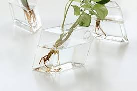 2 pack wall hanging plant terrarium glass planter diamond
