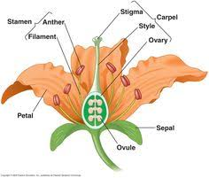Style Flower Part - parts of a flower hibiscus cycle 1 classical conversations
