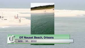 white shark off nauset beach orleans mass youtube