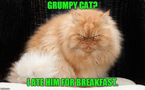 Angry Cat No Meme - grumpy cat is no match for this guy in fact he ate him for