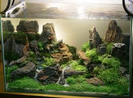 Aquascape Design Feru Sondika Kibo Aquascape Indonesia