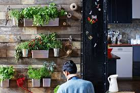 bittergurka planter review indoor kitchen herb garden upside down