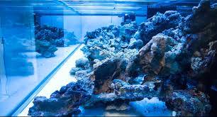 Aquascaping A Reef Tank A Masterpiece Is Born Time Lapse Aquascaping Of Worldwide Corals