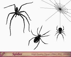 spider web svg spider svg dxf png insects svg bugs clipart cut files for