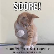 Adoption Meme - meme adoption caigns adopt a meme