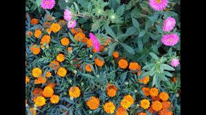 541 aapki farmaish par mera small terrace garden part 2 hindi urdu 15 10 17
