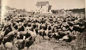 history notes the clark hewett turkey farm on doughty road