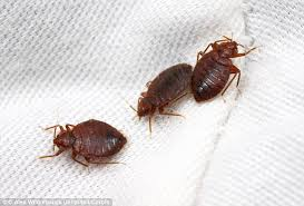 Bed Bugs Smell Democratic National Convention Bed Bugs Are A Bigger Problem Than