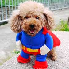 Small Dog Costumes Halloween Buy Wholesale Superman Dog Costume China Superman Dog