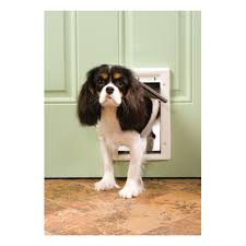 pet doors dog u0026 cat doors and pet gates at ace hardware