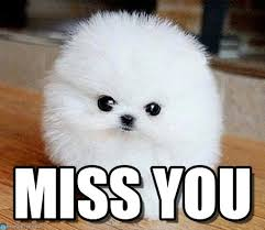Miss You Meme - miss you perro meme on memegen