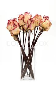 dried roses bouquet of dried roses on a white background stock photo colourbox