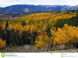 Ohio Mountains images Aspen fall colors of colorado s ohio pass stock image image of jpg