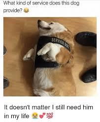 Tired Dog Meme - tired dog meme bigking keywords and pictures