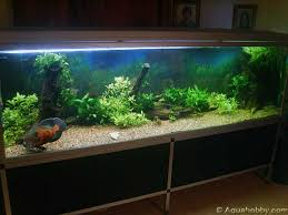 How To Clean Fish Tank Decorations 182 Best Adorable Oscars The Lovable Giants Of The Freshwater