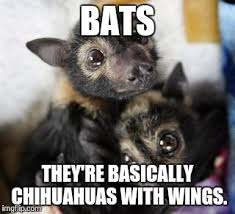 Bat Meme - bats imgflip