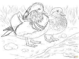 male and female mandarin duck pattern coloring page animal