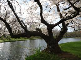 file tree near lake in nomahegan park in nj jpg wikimedia commons
